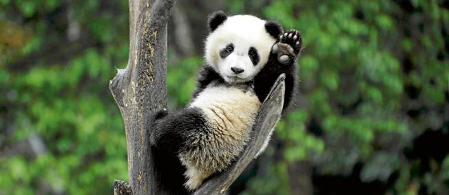 Panda 4 le retour de baton de Google
